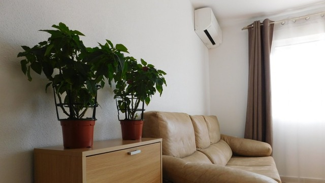 Cozy bright apartment in Torrevieja - 2